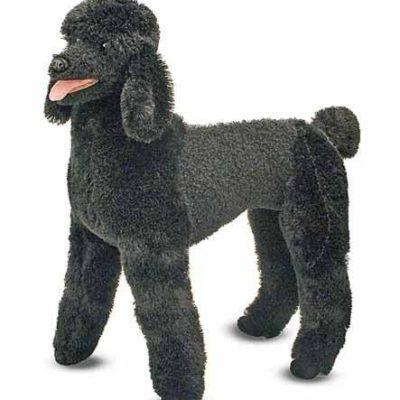 lifelike black poodle